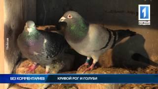 Кривой Рог и голуби