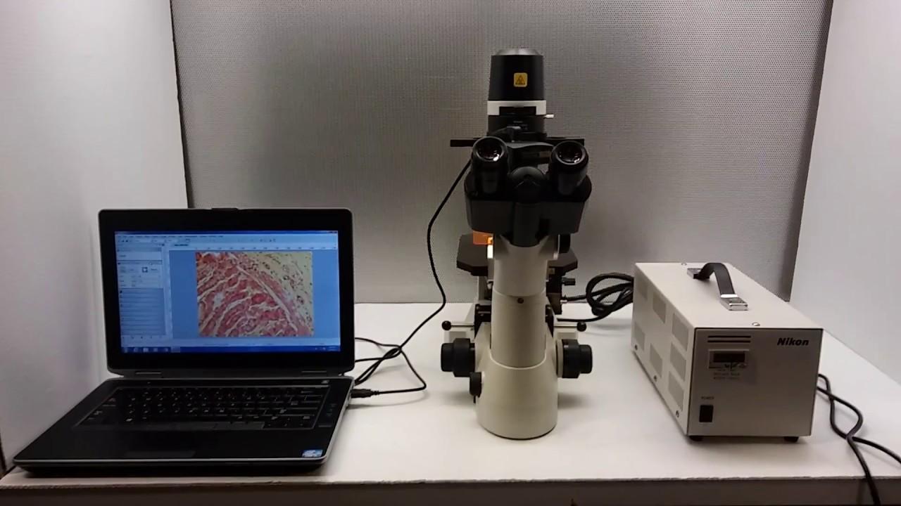 nikon eclipse ts100 f inverted fluorescence microscope 11515 youtube rh youtube com Nikon Inverted Microscope nikon eclipse ts100 user manual