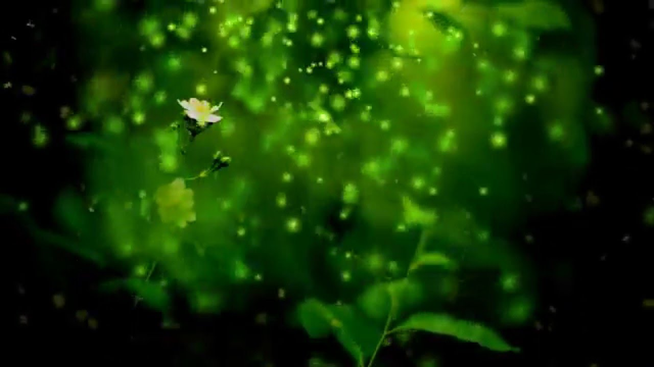 green nature background video hd - youtube