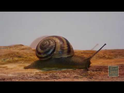 Secret Snails of West Texas