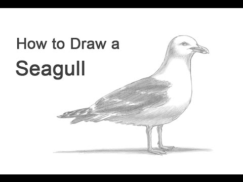 How To Draw A Seagull Youtube