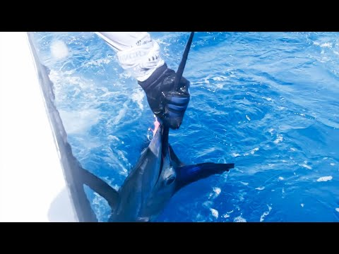 SAILFISH Fishing Best-Of's With The Salt Life Team!