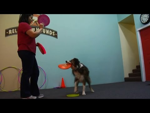 How to Train a Dog | K9 Dog Training Club