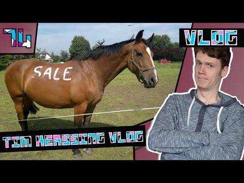 Paard te koop doovi for Paard aan huis te koop