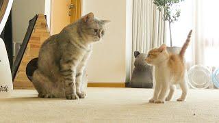 티티는 아기 고양이가 너무 신기한가 봐요