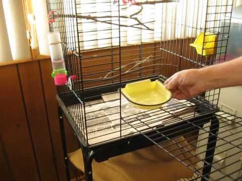 Canary bird bath Arizona , lake havasu city