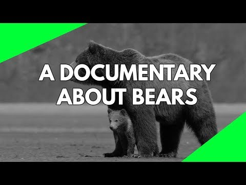 Wildlife Documentary: A full length documentary about the life of Bears HD