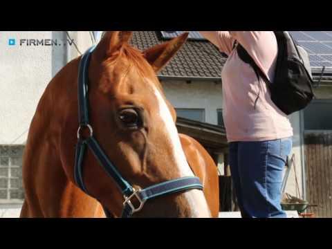 Bild: Ausrüstung von Reiter, Pferd, Stall, Anlage und Koppel