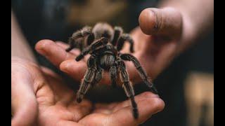 Самые опасные пауки России