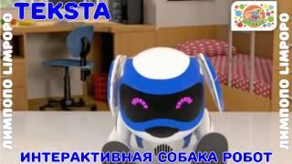 видео Собака Текста