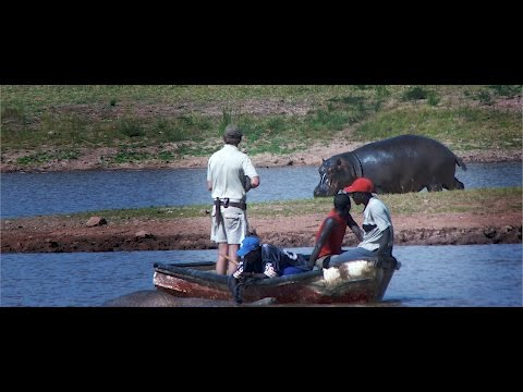 Hunting leopard and hippo in Zimbabwe with Limcroma Safaris