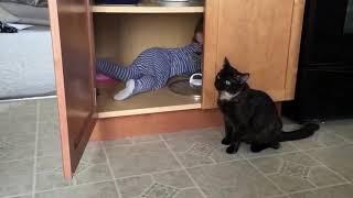 Смешное видео про котов приколы про котов смешные коты