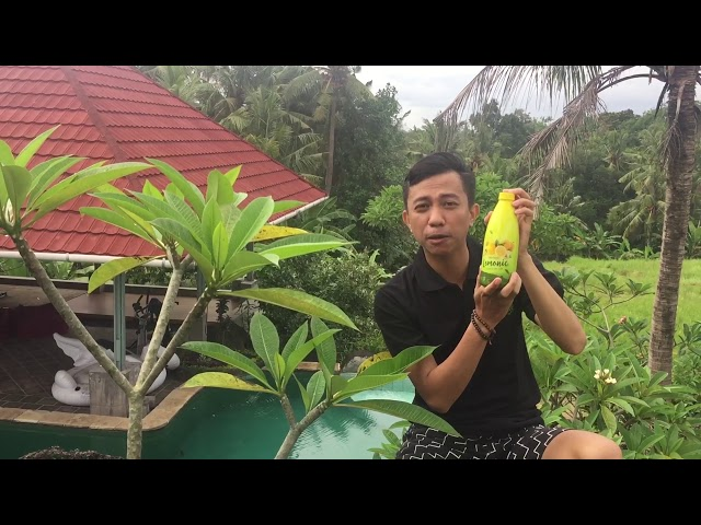 Herbal pelangsing Alami Lemonic