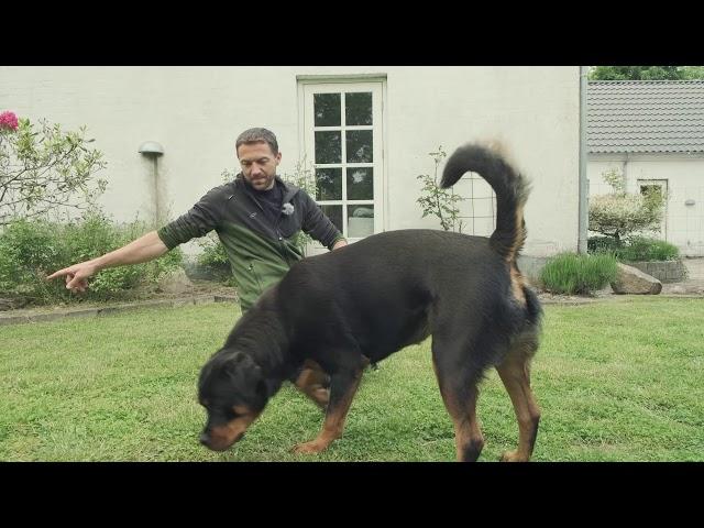 Hundetræning med Jan fra Egely Hunde - del 1 af 2