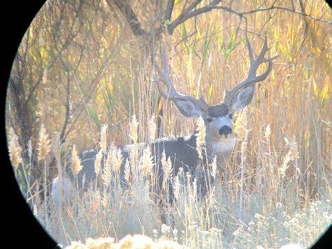 Antelope Island Bucks In The Rut