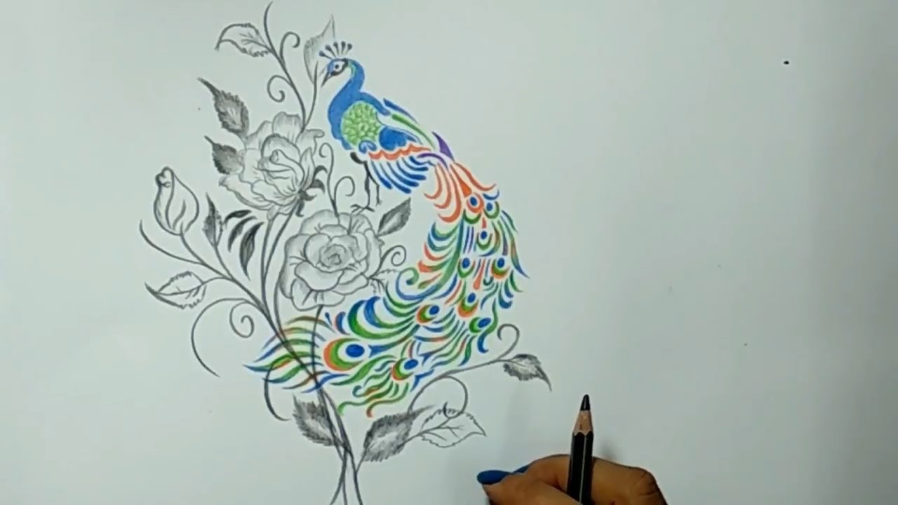 Cute drawings color pencil drawing an amazing peacock easy