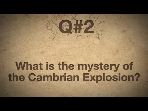 Darwin's Doubt author Stephen C. Meyer on What is the mystery of the Cambrian explosion?