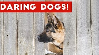 Funniest Daring Dog & Escape Animal Videos Weekly Compilation 2016 | Funny Pet Videos