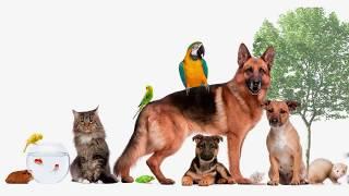 Как говорят животные. Развивающее видео для детей  Домашние животные. Голоса животных.