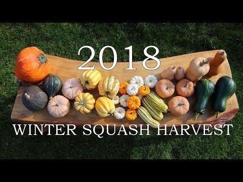 2018 Winter squash harvest 11 varieties!