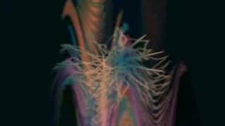 AFX (aka Aphex Twin) -