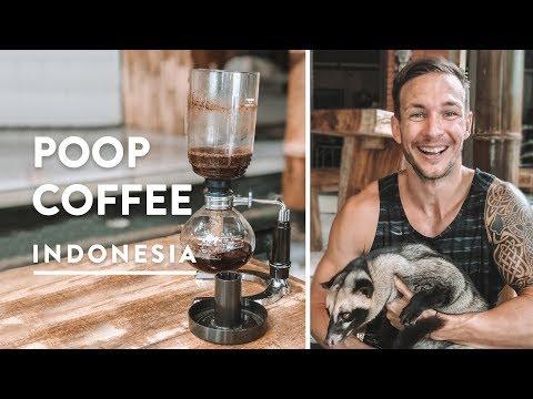 POOP COFFEE UBUD LUWAK KOPI | Civet Cat Bali | Indonesia Vlog 137, 2018