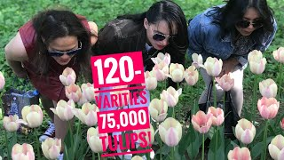TULIP FESTIVAL 2019, A TRAVEL GUIDE (FOR FIRST TIME TRAVELLERS)  || SPB EVENTS GUIDE 2019 Питер 2019
