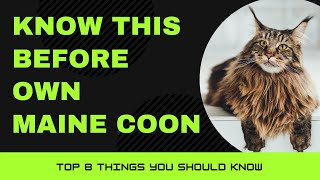 Maine Coon Cat Breed Portrait  What You NEED to Know Before Owning!!