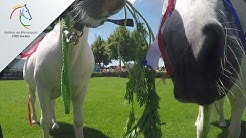 CHIO Aachen Pony-Prognose: EM Finale Portugal - Frankreich