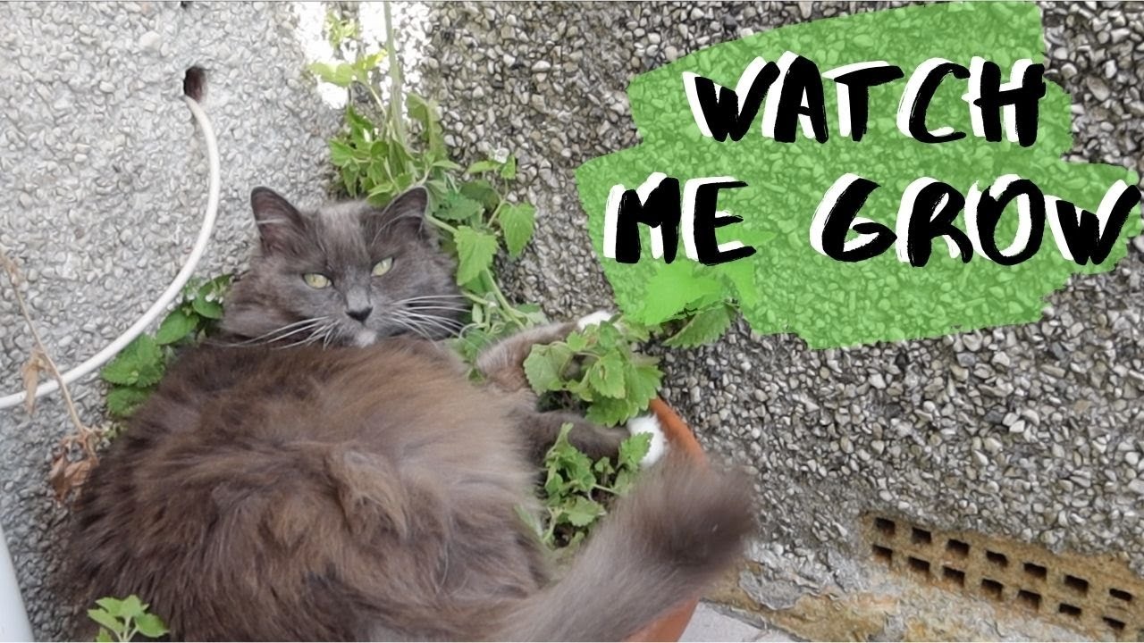 Mouse Thinks She Is Catnip & WONT Get Out Of The Plant Pot