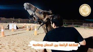 شاهد العلاقة الرائعة بين الحصان وصاحبه ( المهر ورد وابو ايمن)