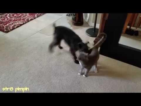 Dog vs Cat: Epic battle