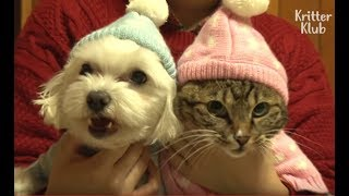 Dog Tries To Kiss A Cat Who He Has A Crush On | Kritter Klub