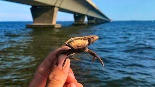Details about  /Fiddler Crab Bridge Donkey Jigs