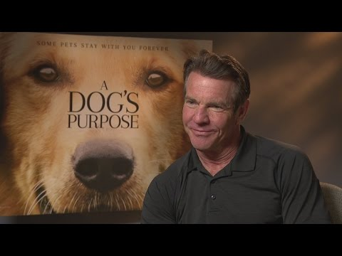 A Dog's Purpose: Dennis Quaid talks up his 'best film'