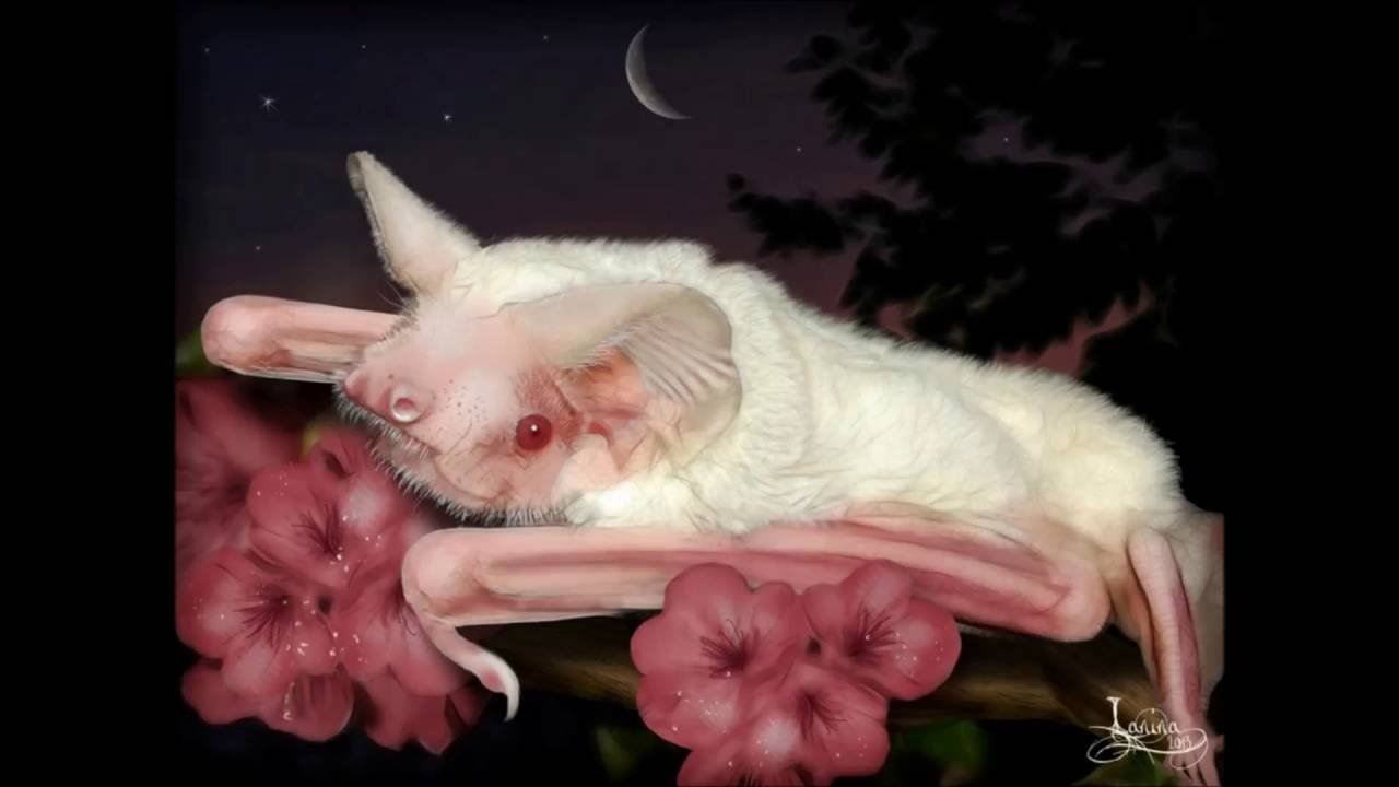 albino bat youtube