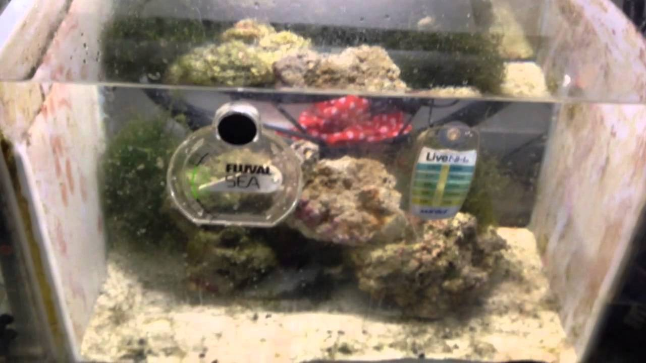 Craigslist fish tank kevin