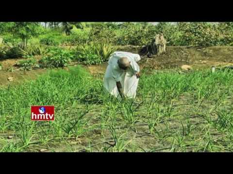 Success Story Of Organic Farmer By Farmer Manohara Chari | Garlic Cultivation | Nela Talli | HMTV