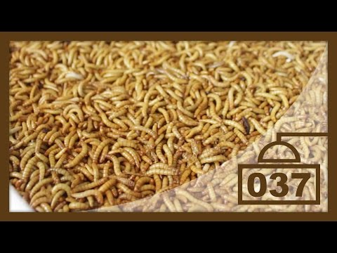 """""""Rainbow Mealworms"""" Unboxing & Review   Best Feeder Insect Site?"""