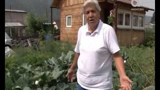 Голова садовая. Почему нельзя обрывать листья у капусты(, 2016-08-06T06:23:21.000Z)