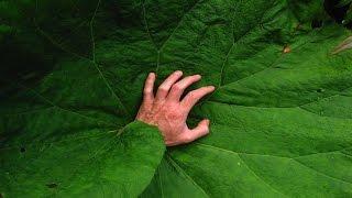 8 Deadliest Plants & Trees