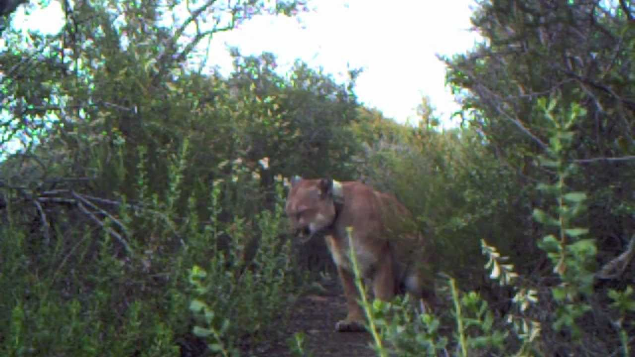 Best of 2011 Trail Camera Footage - YouTube