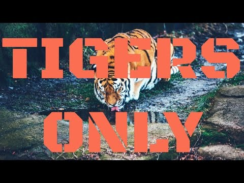 IF YOU ARE A TIGER FAN THEN PLEASE WATCH!!!!!