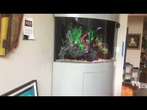 MaxSold Aquarium - Justin Lane Paoli PA