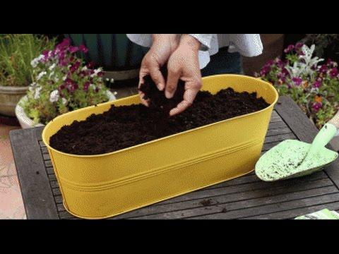 Semer des plantes aromatiques en jardini re youtube - Plantes aromatiques en jardiniere ...
