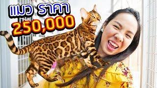 พี่เฟิร์นซื้อแมวตัวละ 250,000 บาท มาเลี้ยง!!! | 108Life ABT Bengal Cats