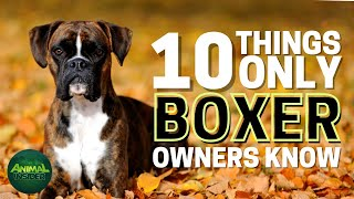 10 Things Only Boxer Dog Owners Understand
