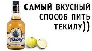 Как вкуснее всего пить Текилу