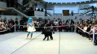 Цирковое представление большой пудель Белгород