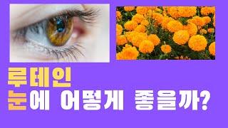 루테인 눈에 어떻게 좋을까? 효과는 있을까? 안구건조증…